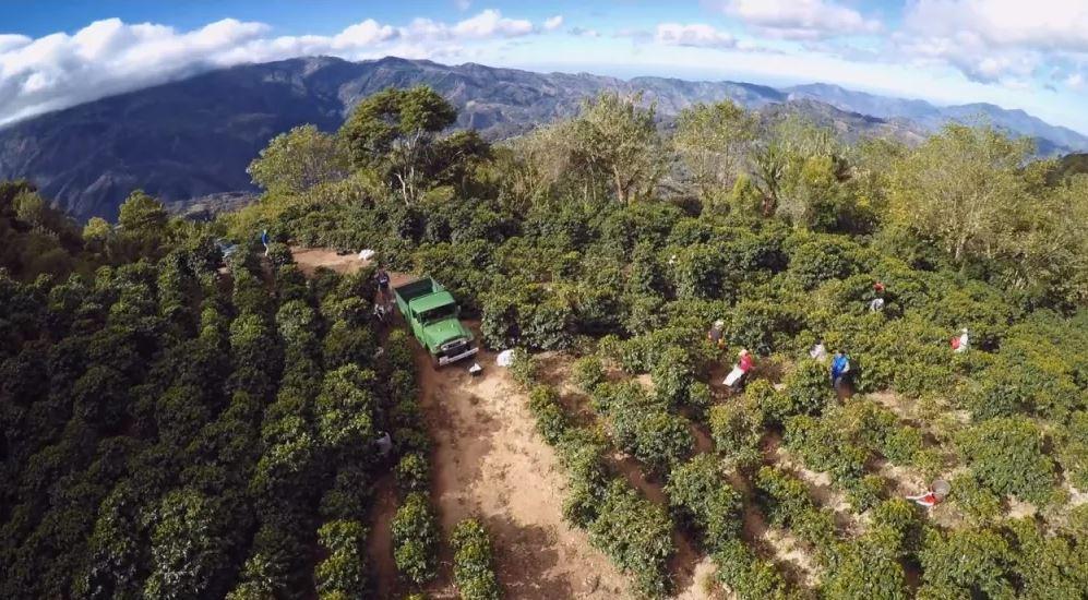 Kahvenin peşinde Kosta Rika'ya yolculuk 1