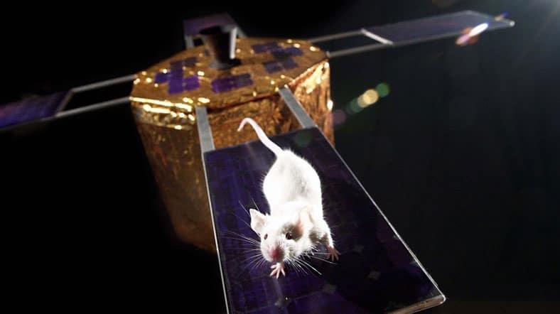 Uzayda fare dönemi başladı 1