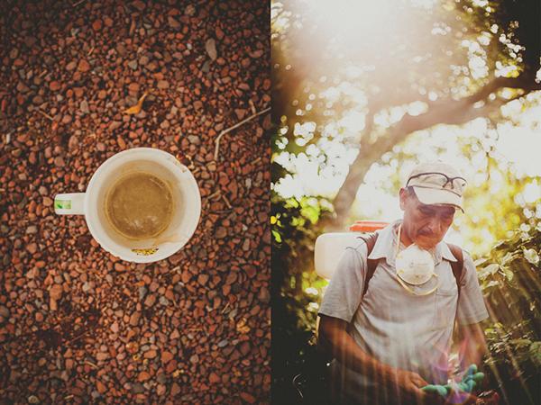 Fal değil gerçek! İklim değişikliği kahveyi vuracak, üretim azalacak 3