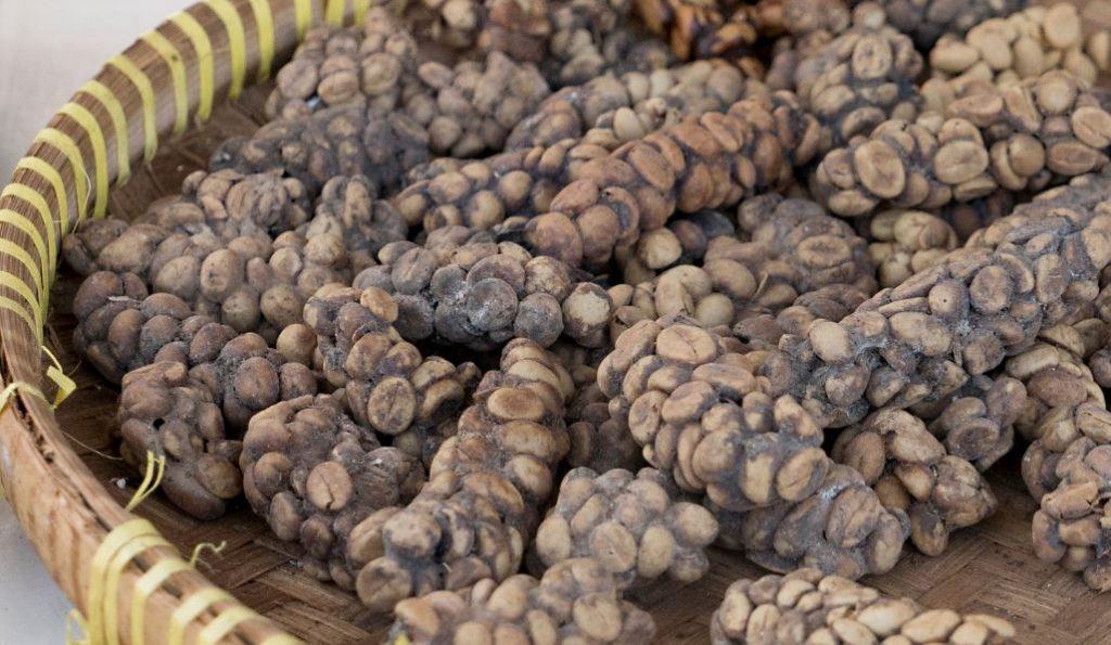 Dünyanın en pahalı kahvesi kopi luwak 1