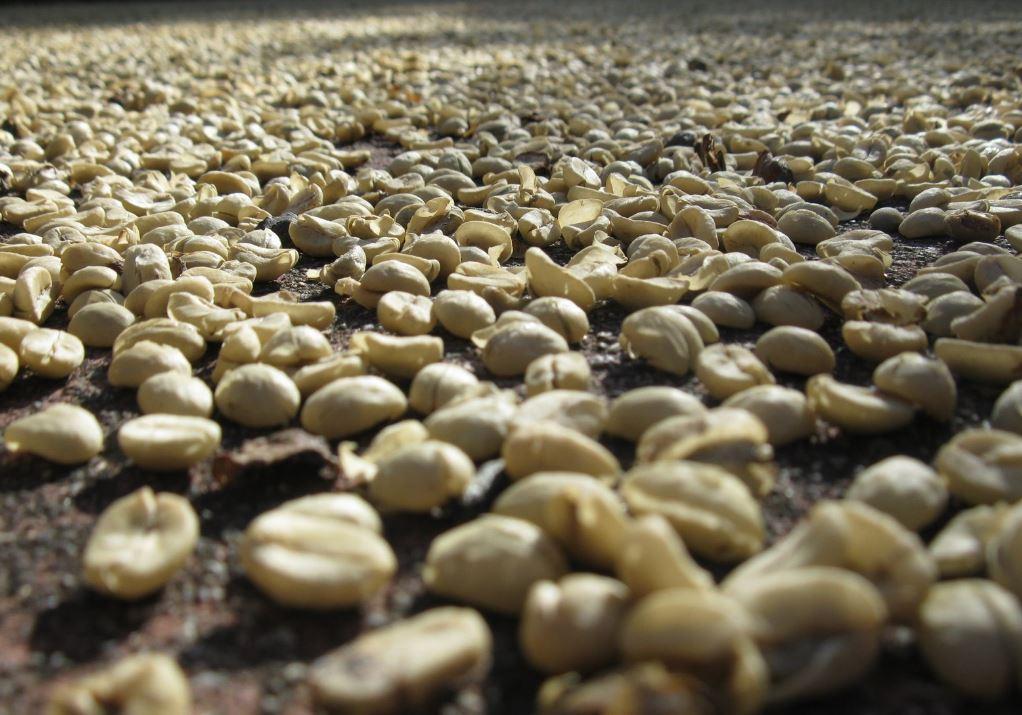 Macu Picchu'dan yayılan kahve kokusu 1