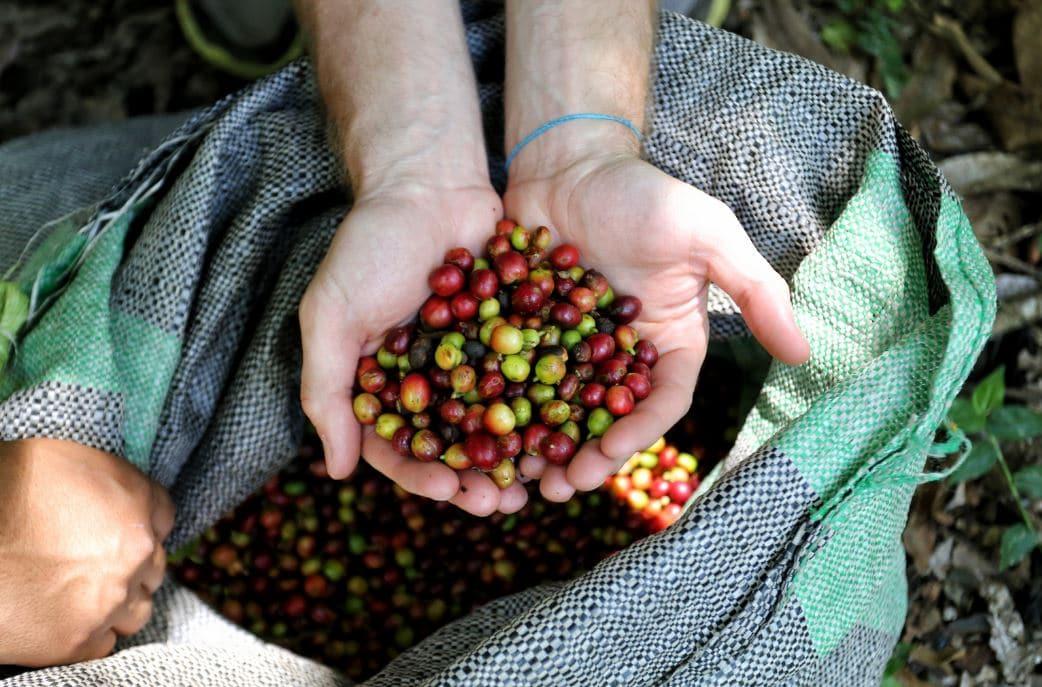 Macu Picchu'dan yayılan kahve kokusu 2