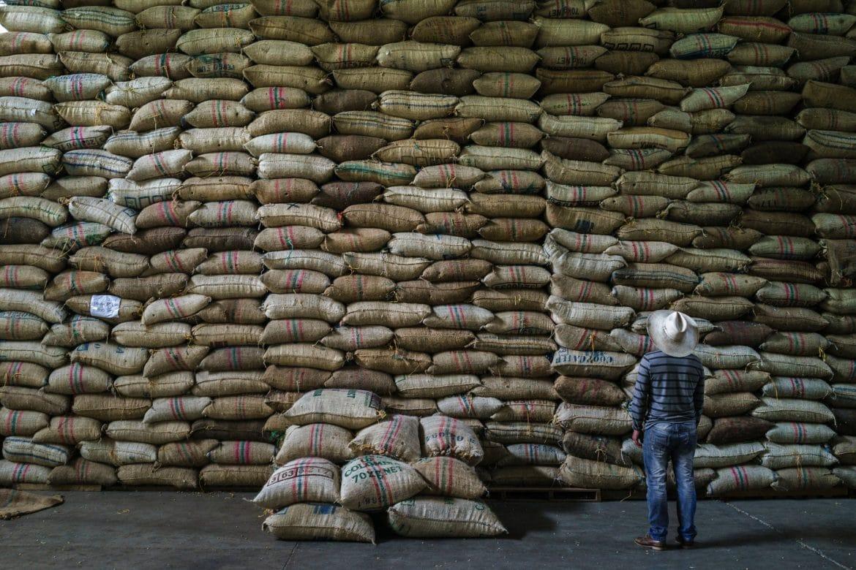 Kahve bitkisi tükenme riski altında