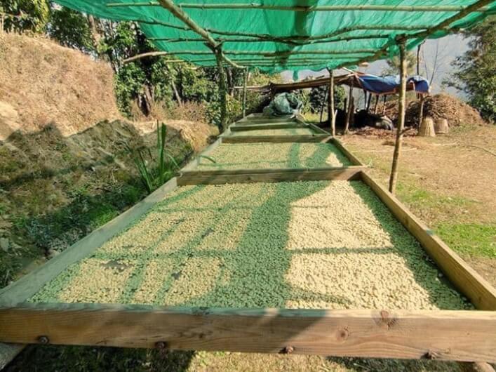 Himalaya kahvesi